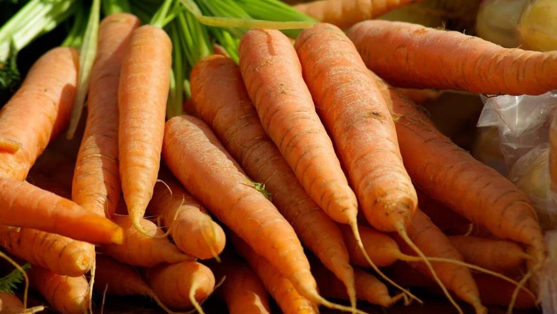 Carottes : Bienfaits pour la santé    Les jardins de Laurent du vieux fermier