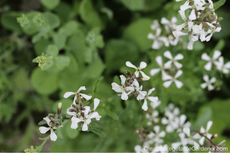 boulonnage des fleurs de roquette