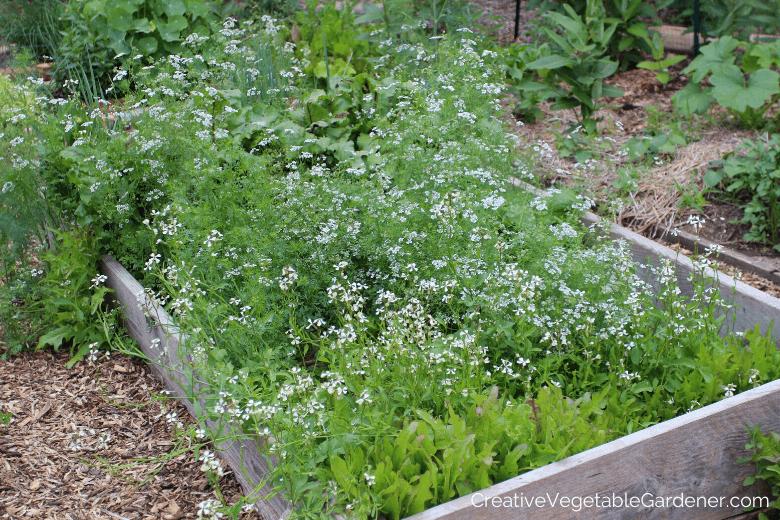 plantes potagères boulonnage dans jardin