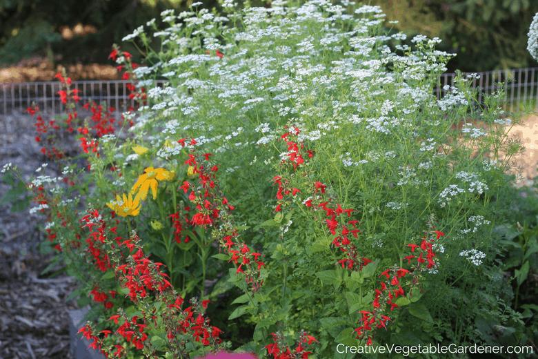 Jardinier potager créatif : que se passe-t-il lorsqu'une plante verrouille ?