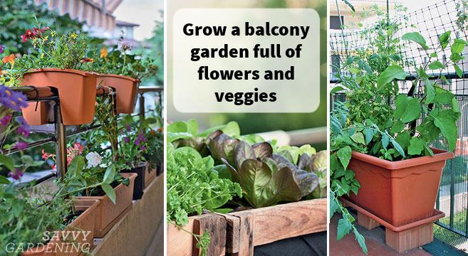 Cultivez un jardin de balcon plein de légumes, d'herbes et de fleurs