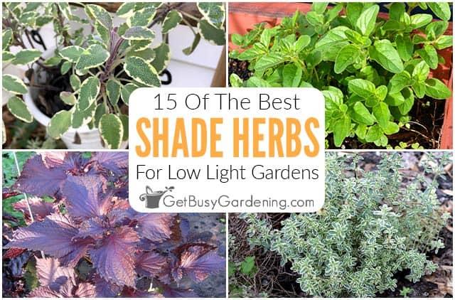 15 herbes à cultiver dans votre jardin d'ombre