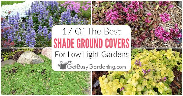 17 meilleures plantes couvre-sol pour l'ombre
