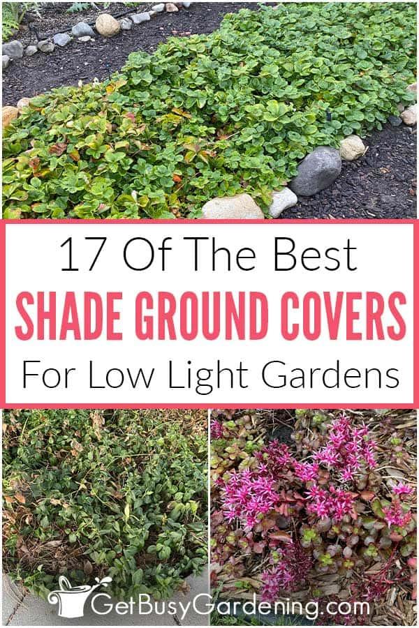 17 des meilleurs couvre-sols ombragés pour les jardins à faible luminosité