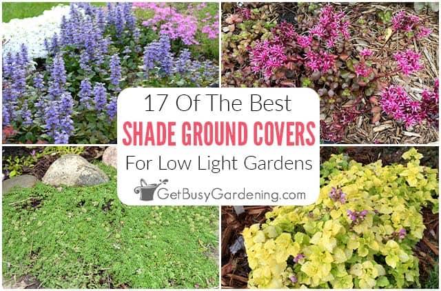 17 meilleures plantes couvre-sol qui poussent bien à l'ombre