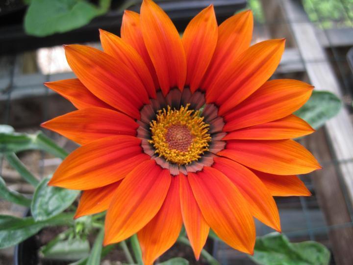 [Orange Flowers For Your Garden]