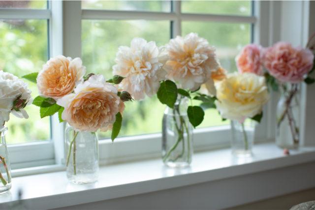 Vignette de roses sur un rebord de fenêtre du studio Floret