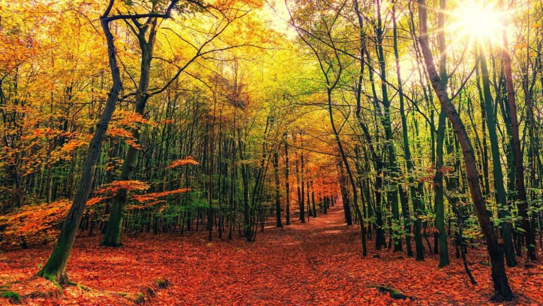 Prévisions météo d'automne 2021: l'automne maintient la chaleur