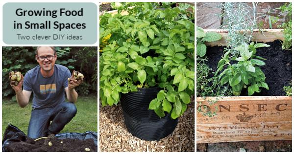 Deux projets de bricolage intelligents et faciles pour faire pousser des aliments dans de petits espaces
