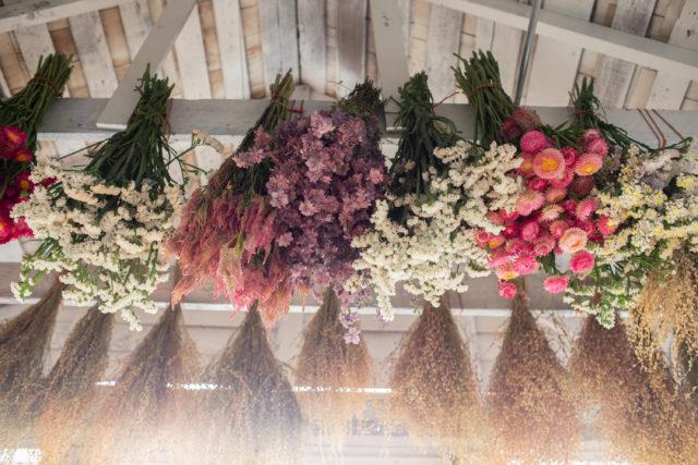 fleurs séchées en studio