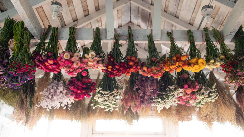 À la découverte des fleurs séchées – Fleurs de Floret
