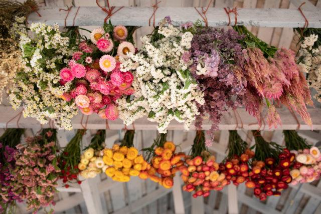 Fleurs séchées suspendues au plafond à Floret
