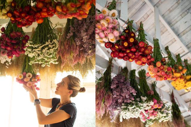 fleurs séchées à Floret