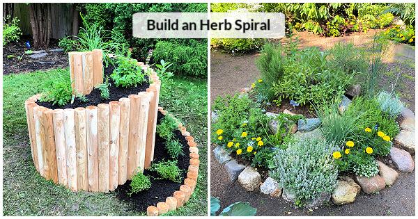 Un lit magnifique et productif pour faire pousser des herbes de jardin
