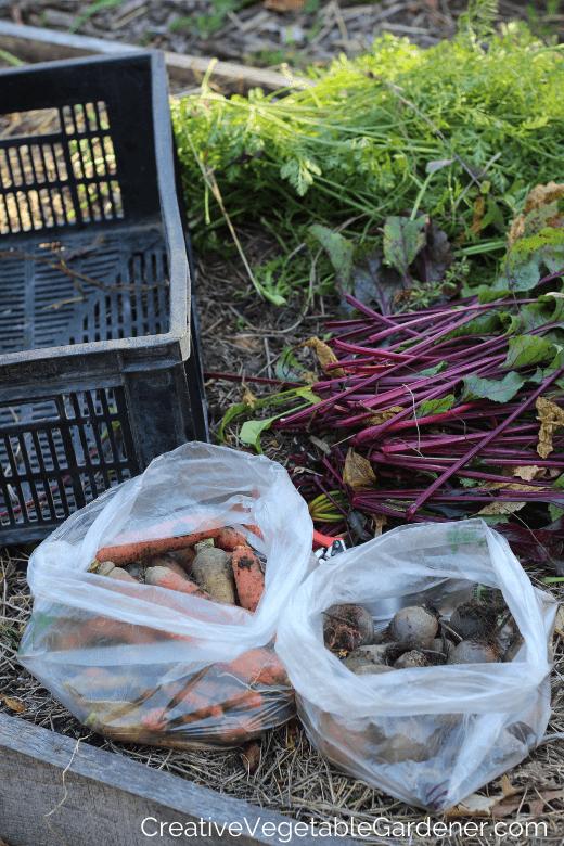 conserver les carottes pour l'hiver