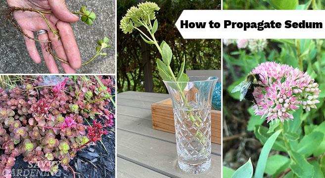 Techniques pour élargir votre collection de plantes
