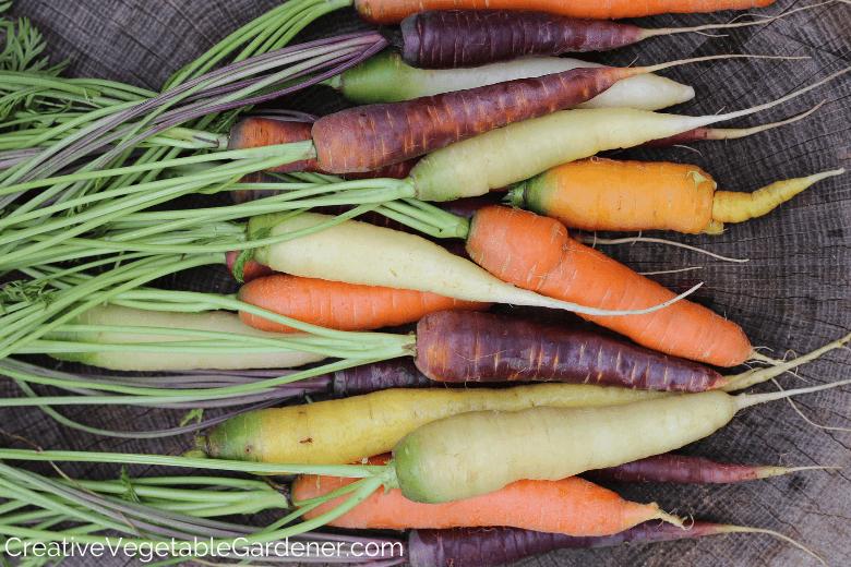 Jardinier de légumes créatif : 9 étapes rapides pour conserver les carottes fraîches du jardin