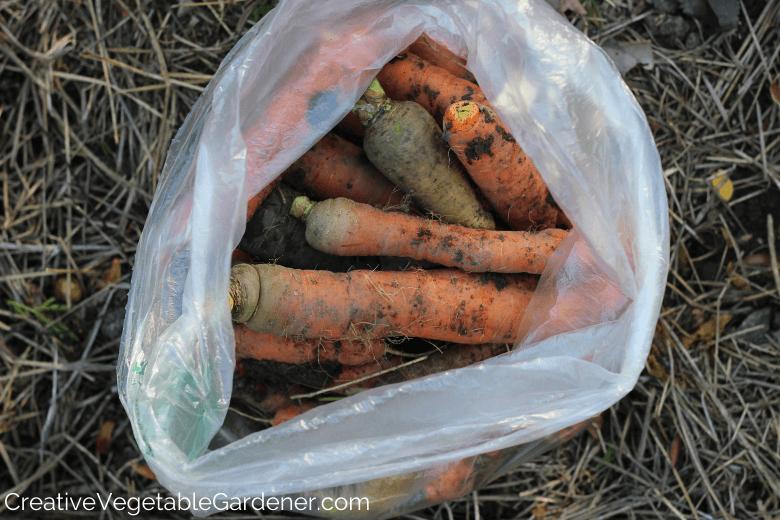comment conserver les carottes du jardin