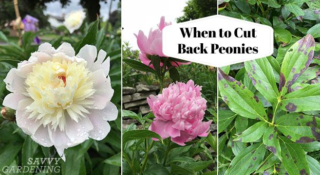 Planifiez votre taille pour aider les fleurs de l'année prochaine