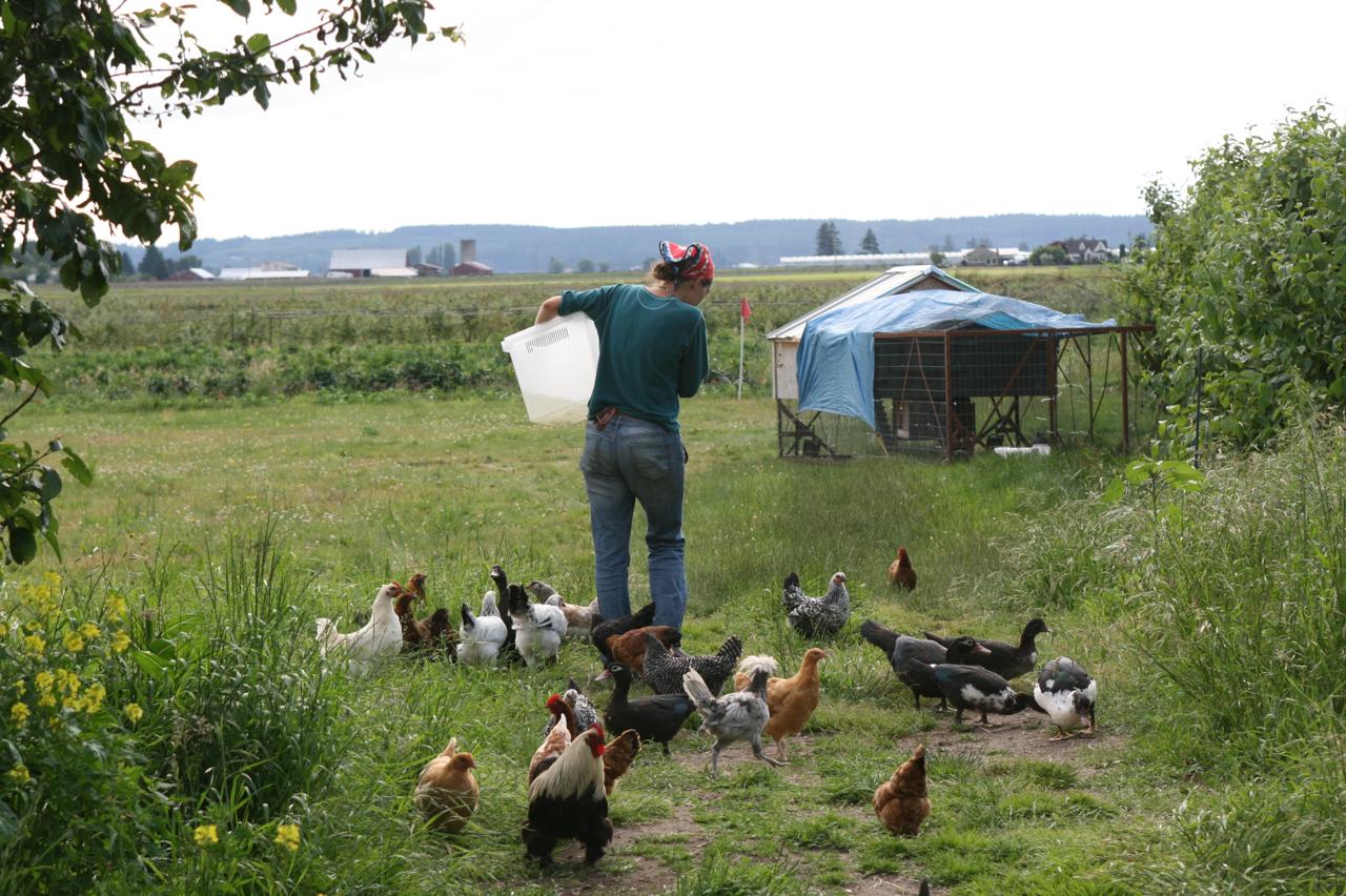 Erin Benzakein nourrit des poulets à la ferme