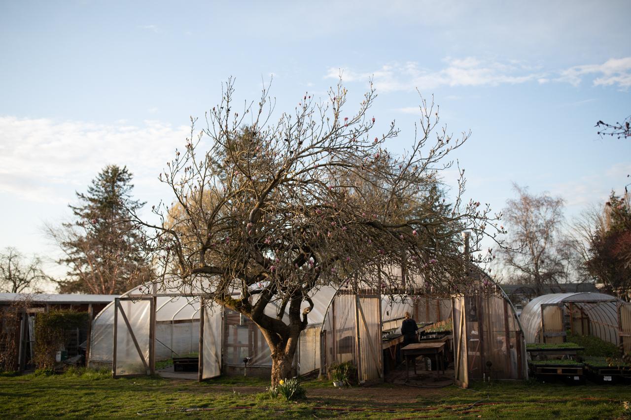 Erin Benzakein dans une maison cerceau à Floret