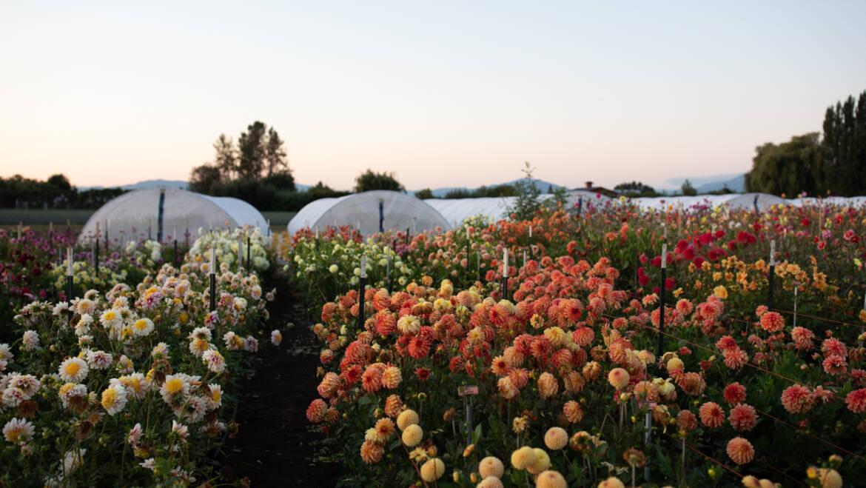 L'histoire des ateliers Floret Partie 2