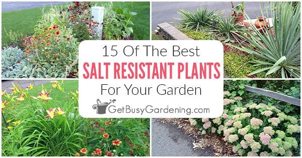 15 meilleures plantes résistantes au sel pour votre jardin