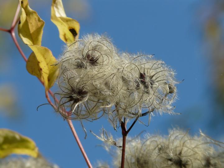 Des plantes avec des graines pour nourrir les oiseaux
