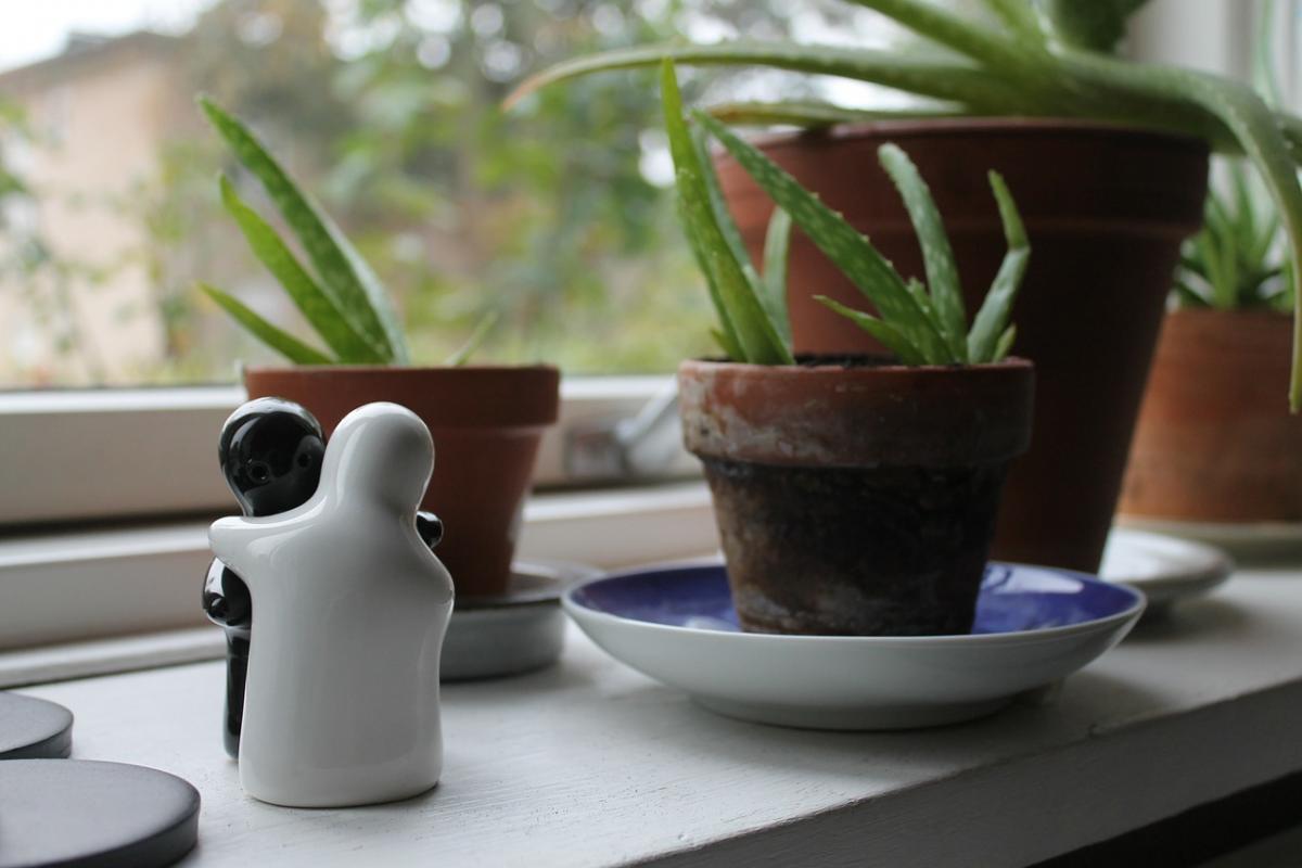 10 plantes d'intérieur qui purifient l'air