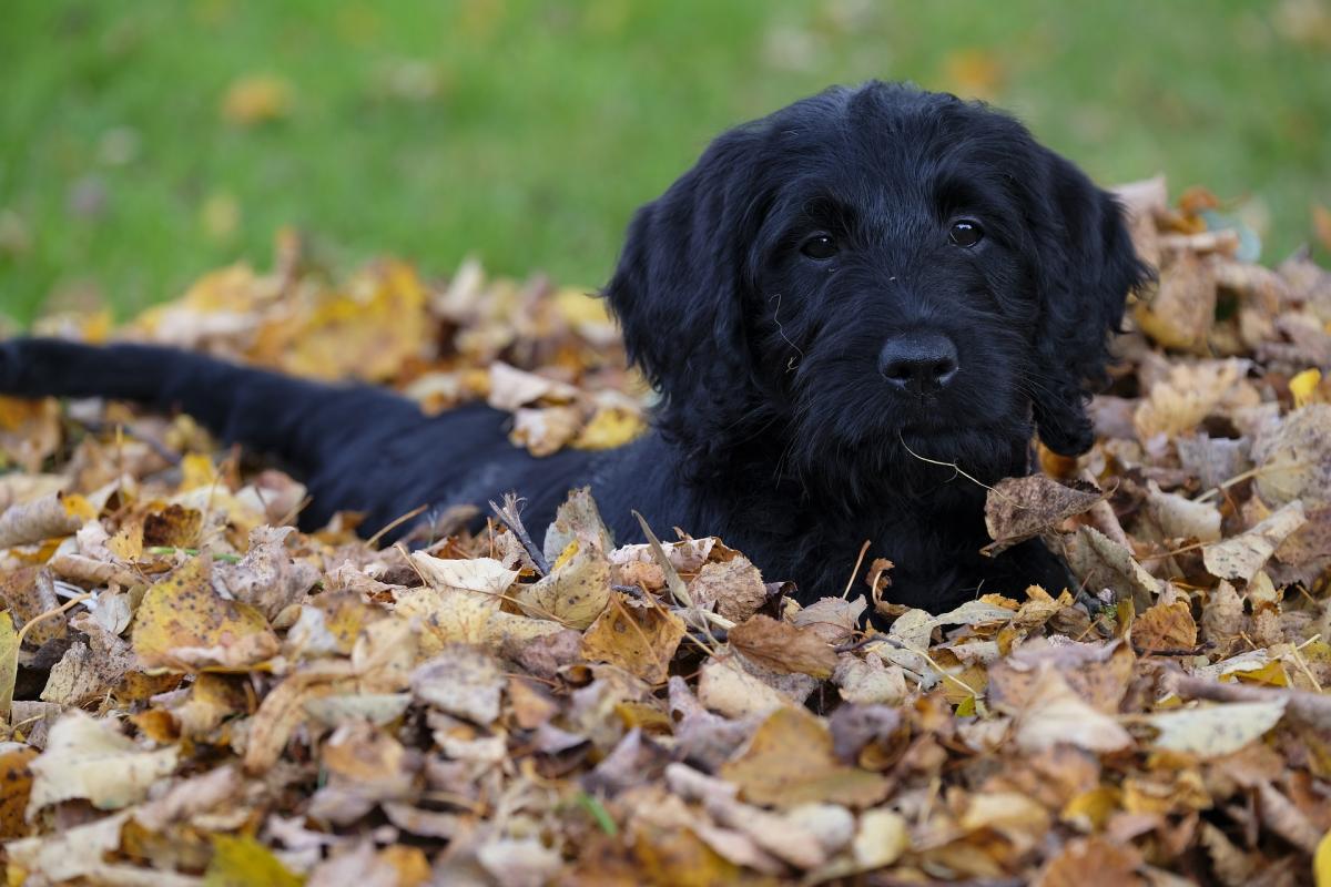 8 bonnes façons d'utiliser les feuilles d'automne dans le jardin