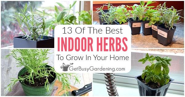13 meilleures herbes à cultiver à l'intérieur
