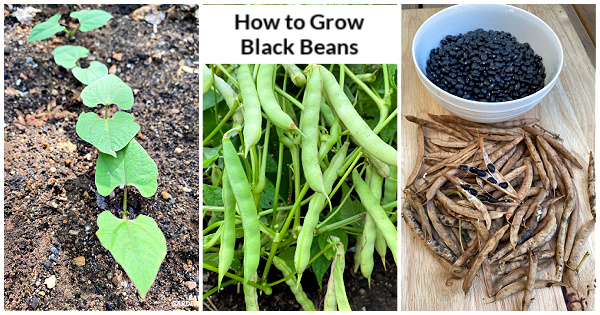 Un guide de la graine à la récolte