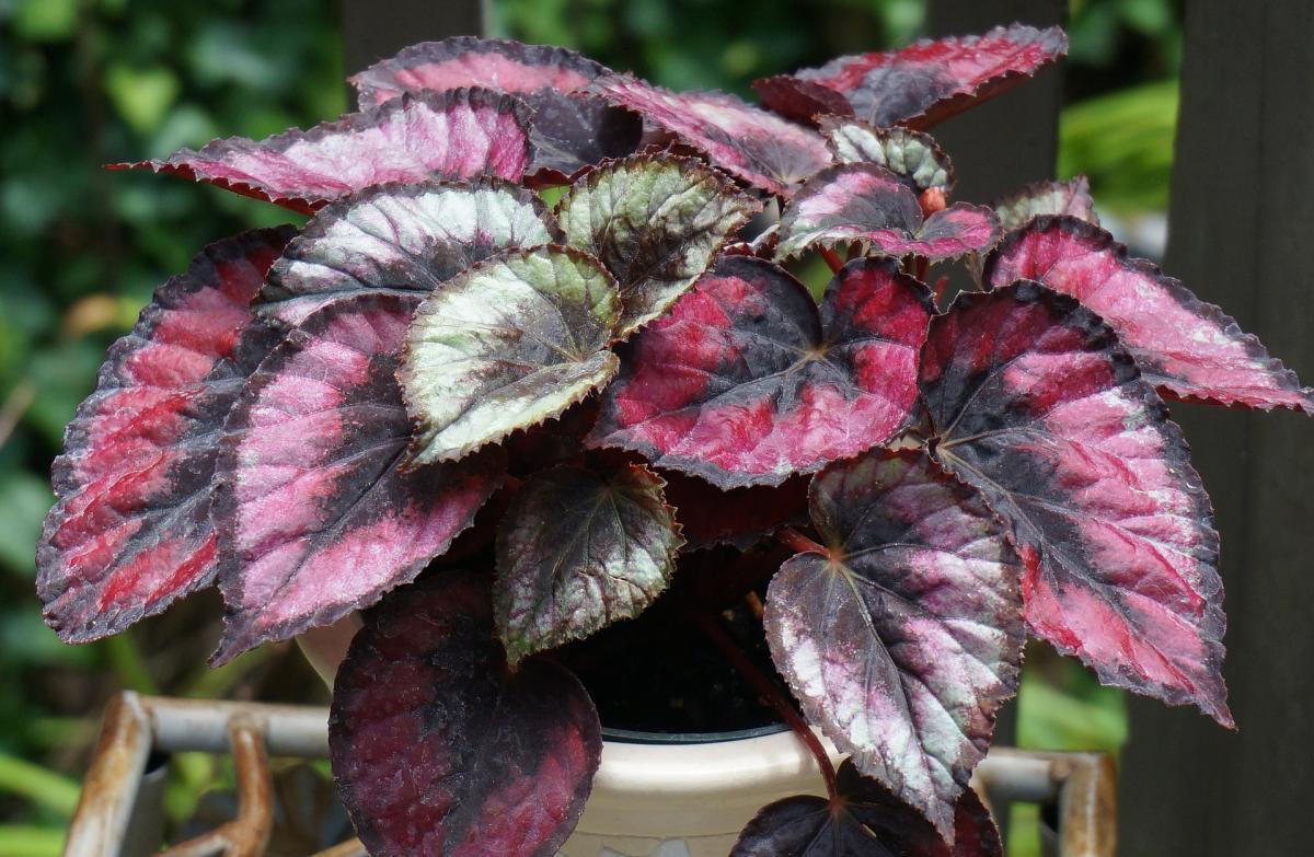 Les meilleures plantes d'intérieur pour une faible luminosité